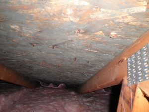 Water Damage And Crawlspace Mold Growth